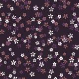 Branco pequeno, rosa e flores lilás no fundo roxo Contexto escuro do prado da noite ilustração royalty free