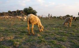 Branco rurale fotografia stock