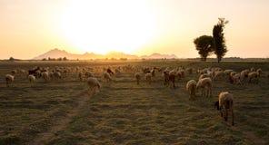 Branco rurale immagini stock libere da diritti