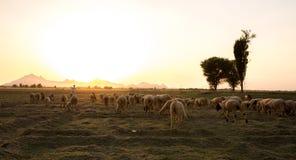 Branco rurale immagine stock