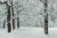 Brancos das árvores na neve após uma queda de neve, paisagem do inverno imagens de stock royalty free