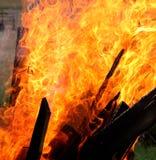 Brand bosrijk behang stock foto