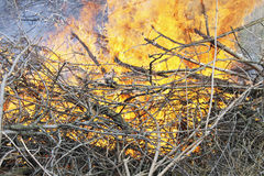 Brand brandende bomen Royalty-vrije Stock Foto's