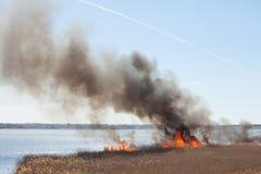 brand Brinnande vass Fotografering för Bildbyråer