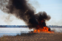 brand Brinnande vass Royaltyfri Fotografi