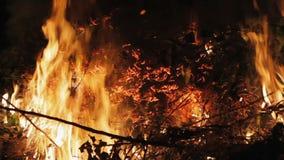 Brand in de bos droge takken stock footage