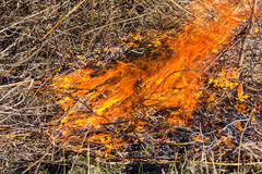 Brand in de struiken stock afbeelding