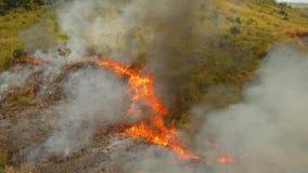 Brand in een tropische struik stock video