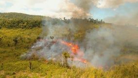 Brand in een tropische struik stock footage