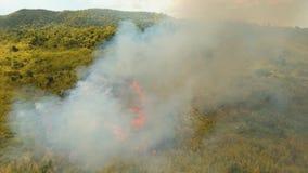 Brand in een tropische struik stock videobeelden