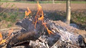 Brand en rook op tuin stock video