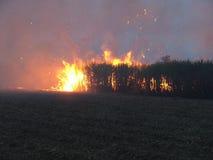 brand för 2 buske Royaltyfri Bild