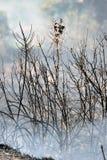 Brand för skala för Zakynthos ö låg i volimes Juli 03 2013, Grekland Royaltyfri Bild