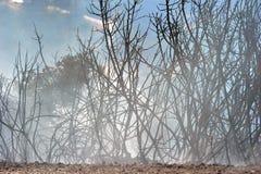 Brand för skala för Zakynthos ö låg i volimes Juli 03 2013, Grekland Arkivbild