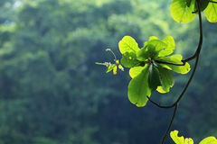 Brand of green tree Royalty Free Stock Photos