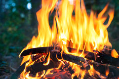 Brand in het bos Stock Foto