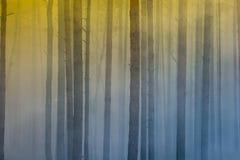 Brand in het bos, rook, smog, gebrand bos stock foto's