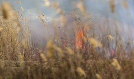 Brand in het Riet Stock Foto