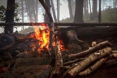 Brand i dimmigt trä Royaltyfria Foton