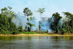 Brand i en djungel Fotografering för Bildbyråer