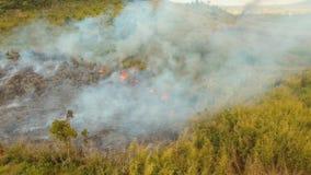 Brand i en tropisk buske arkivfilmer
