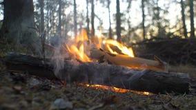 Brand i pinjeskogen på solnedgången stock video