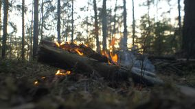 Brand i pinjeskogen på solnedgången arkivfilmer