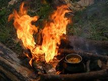 Brand i skog royaltyfri foto