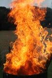 Brand i skog på aftontid arkivbild