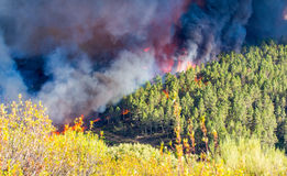 Brand i skogen arkivfoton