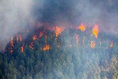 Brand i skogen arkivbild