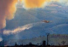 Brand i skogen royaltyfri bild