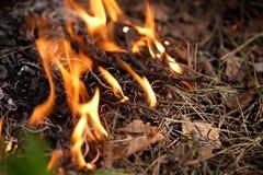 Brand i skogen Fotografering för Bildbyråer
