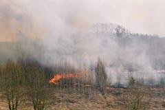 Brand i skoglotterna av rök och brand Br?nnande gr?s och tr?d Brända träd efter en brand och ett stort belopp av rök royaltyfria foton