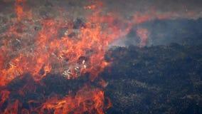 Brand i skognatur stock video