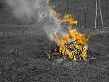 Brand i trädgård Royaltyfri Fotografi