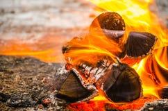 Brand i vinterskogen Royaltyfria Foton