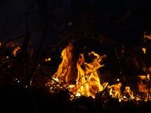 brand löpeld, brinnande pinjeskog i röken och flammor royaltyfri bild