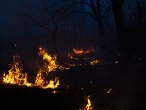 brand löpeld, brinnande pinjeskog i röken och flammor arkivbild