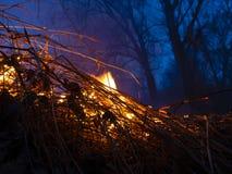 brand löpeld, brinnande pinjeskog i röken och flammor fotografering för bildbyråer