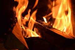 Brand och träd royaltyfria foton