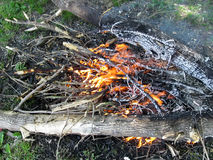 Brand onder de verkoolde boom - hoogste mening royalty-vrije stock afbeelding