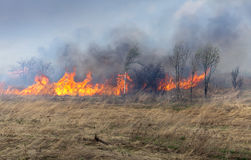 Brand op droge gras en bomen stock afbeelding