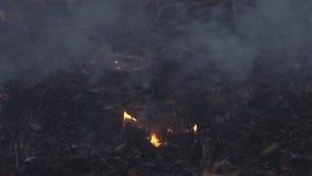 Brand op een droog installatiegebied stock videobeelden