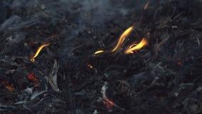 Brand op een droog installatiegebied stock video