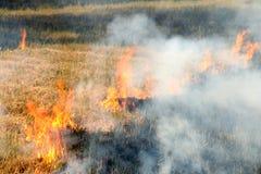 Brand på fältet Royaltyfria Bilder