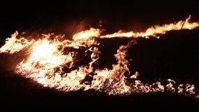 Brand på fältet burning gräs stock video
