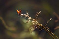 Brand på ett grässtrå Fotografering för Bildbyråer