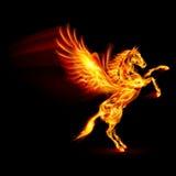 Brand Pegasus. Stock Afbeelding