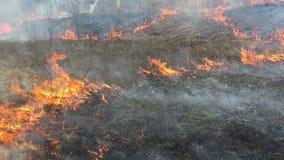 Brand rasar i långt gräs, förgrund lager videofilmer